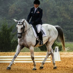 Cut resistant fabric equestrian sector